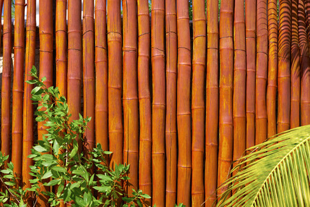 Holbox island cane fence texture in Mexico