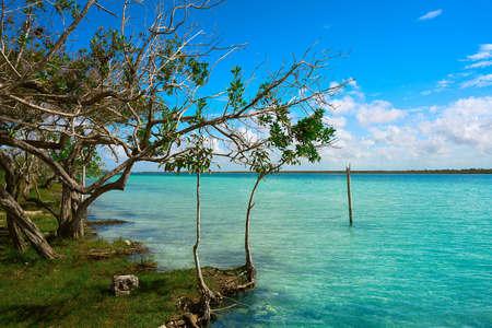 Laguna de Bacalar Lagoon mangroove in Mayan Mexico at Quintana roo 스톡 콘텐츠