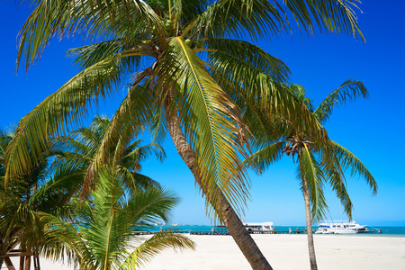 Cancun Playa Langostas beach Pal trees in Hotel Zone of Mexico
