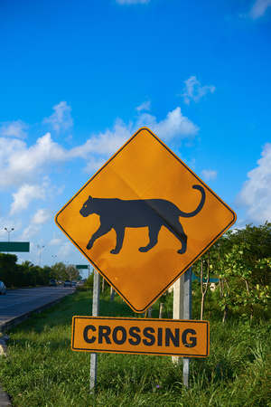 Road sign panther Jaguar crossing in Riviera Maya at Mayan Mexico
