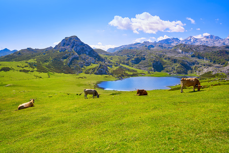 Ercina lake at Picos de Europa in Asturias of Spain Standard-Bild - 109675885