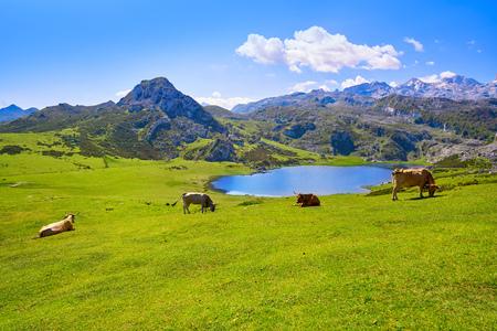 Ercina lake at Picos de Europa in Asturias of Spain