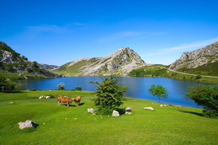 Enol lake at Picos de Europa in Asturias of Spain