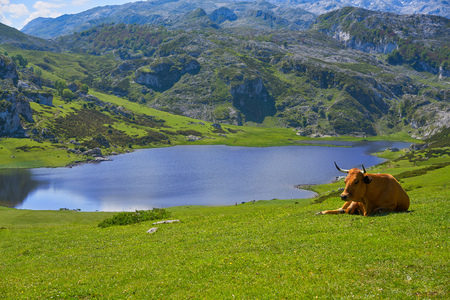 Ercina lake at Picos de Europa in Asturias of Spain