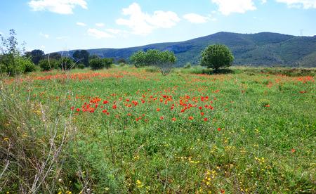 Spring meadows at Camino de Santiago Levante Saint James Way Reklamní fotografie