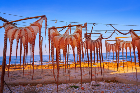 Dried octopus at Mediterranean sunset of Spain 写真素材