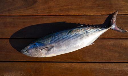 Bonito fish Sarda Sarda tuna fresh catch on wt wood board