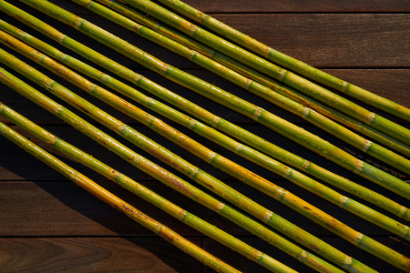 River canes green fresh for agriculture purposes in spain