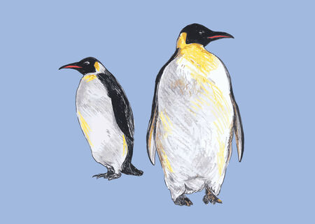 Hand colored drawing of penguins  Vector illustration