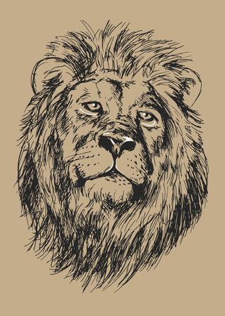 lion dessin: Dessin tête Vector illustration de lion Illustration