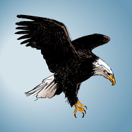 Color drawing of an eagle  Vector illustration