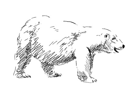 wet bear: Hand drawing a polar bear  vector illustration