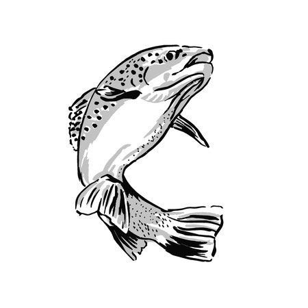 Drawing trout  Vector illustration Vector
