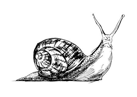 slow food: Disegno a mano illustrazione di una lumaca