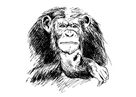 Hand drawing Chimpanzees.