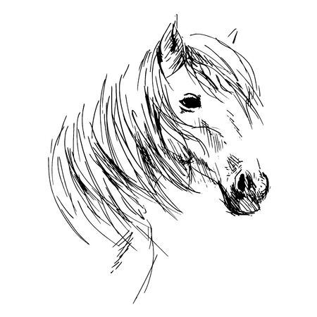 Horses: Hand drawing horse head Illustration
