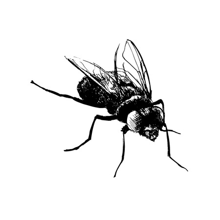 unwashed: Hand drawing fly. Vector illustration