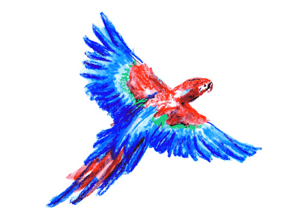 macaw: color drawing macaw Illustration