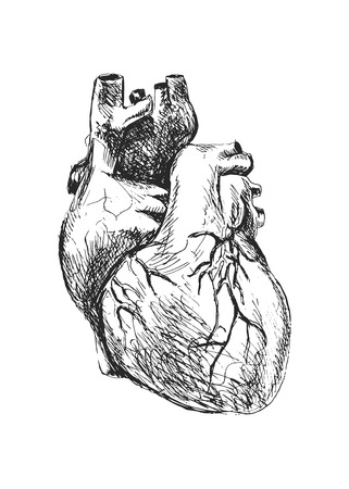 Hand drawing of the human heart