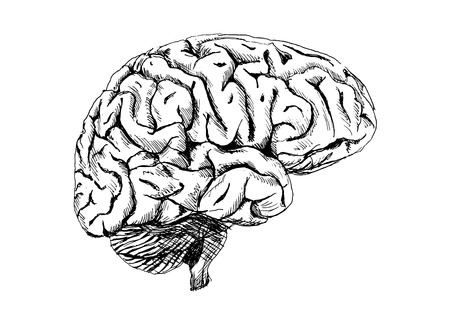 Hand drawing of the human brain