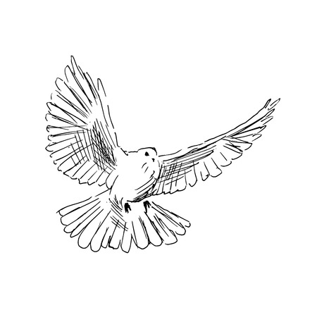 Hand drawing dove Stock Illustratie