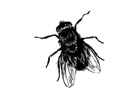 unwashed: Hand drawing house-fly
