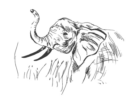 wildlife reserve: hand sketch of the head of an elephant Illustration