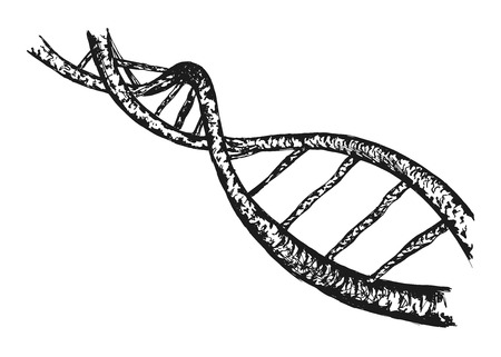 dna strand: hand drawing of the structure of DNA