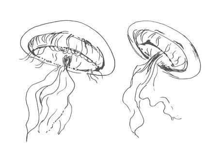 oceanography: hand sketch jellyfish