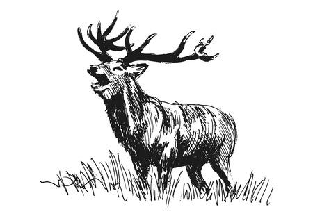 hand sketch deer