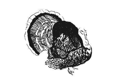 hand sketch turkey