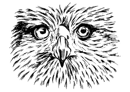 hand sketch of detail eagle face
