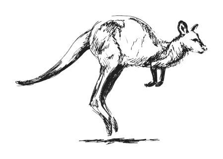 kangaroo white: hand sketch leaping kangaroo