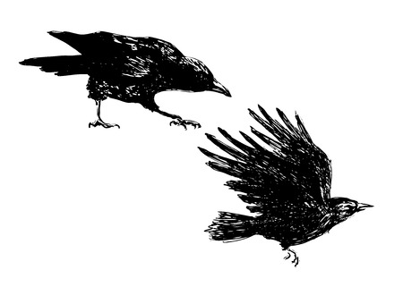 hand sketch of crows