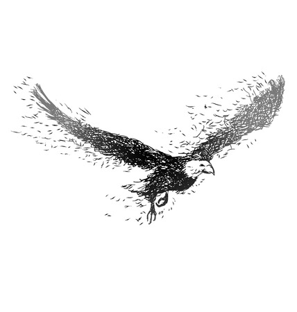Vector illustration of a flying eagle Vettoriali