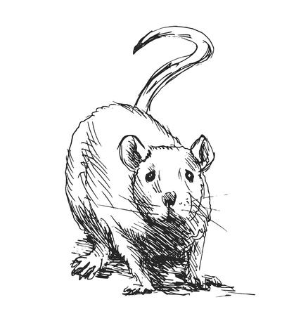 rata: bosquejo de la mano de la rata