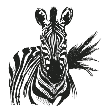 hand drawing zebra