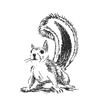 isolated squirrel: hand sketch squirrel