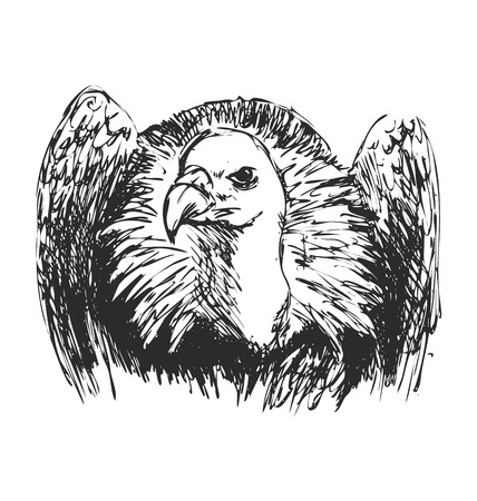 front of the eye: hand sketch vulture