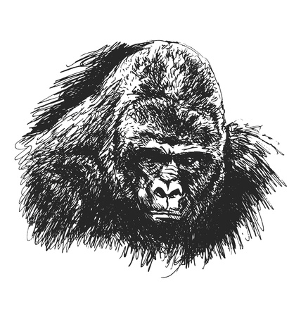 dominant: hand sketch gorilla head