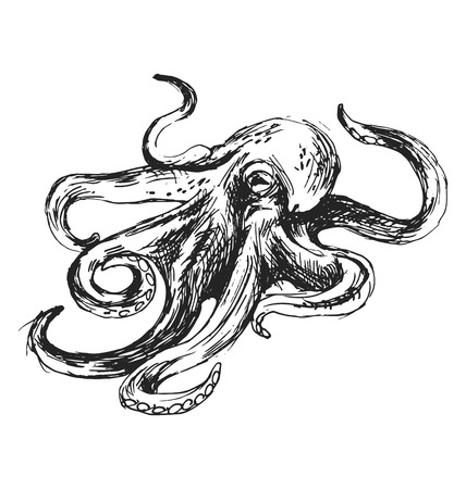 sketch octopus