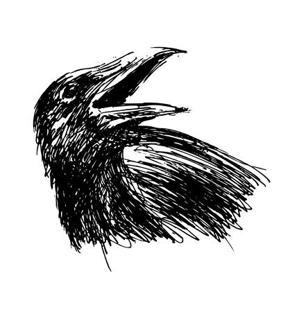 corvus: sketch of  head crow