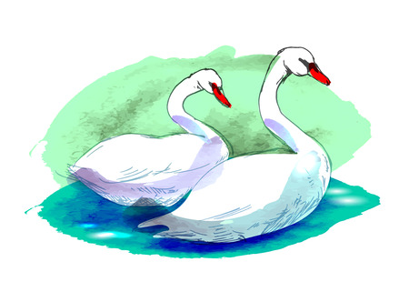 swans: Colored swans