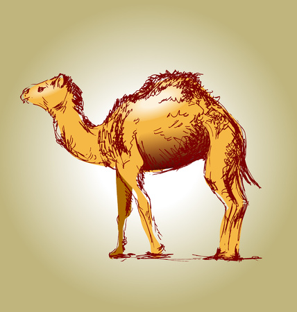 Colored hand drawing a camel