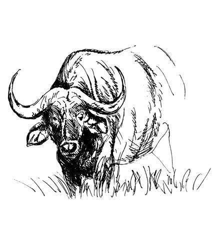 Hand sketch African buffalo