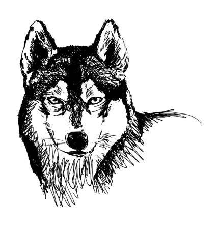 Hand sketch head husky