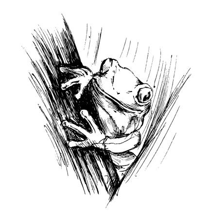 poison dart: Hand sketch frogs