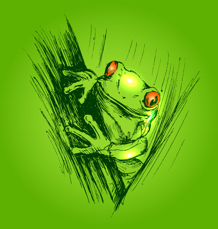 amazon rainforest: Colored hand sketch frogs
