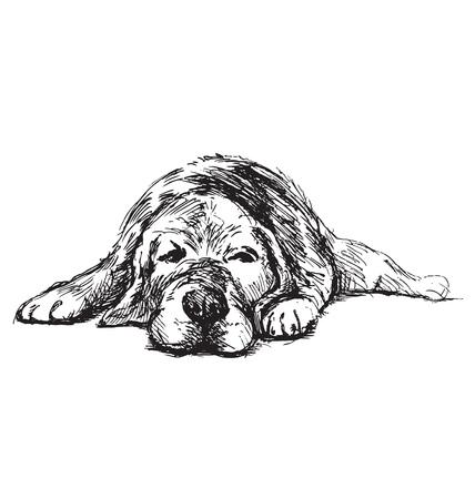 croquis à la main couché chien