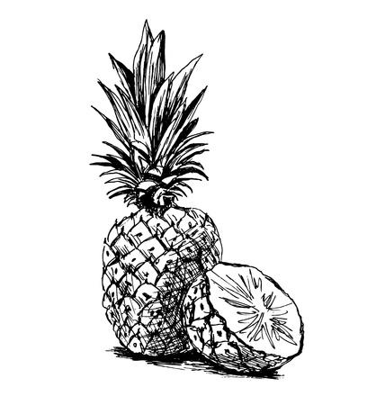 sketch: sketch pineapple